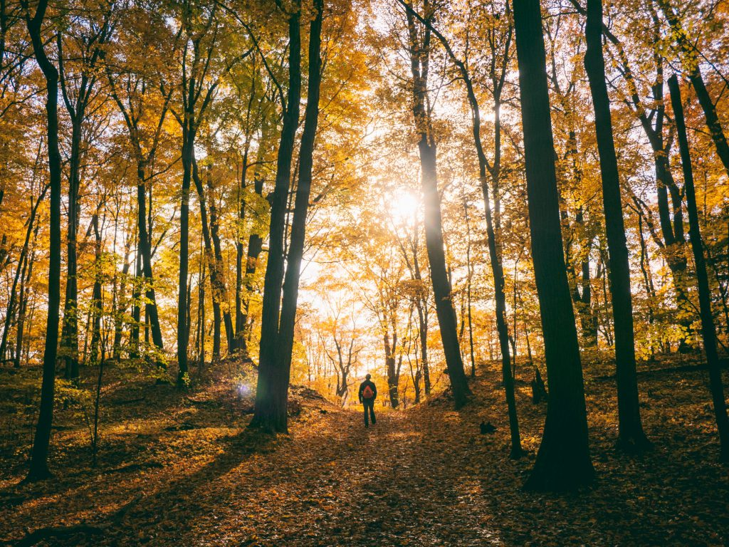 A student walking in the autumn woods with a backpack. Light filtering through the trees.